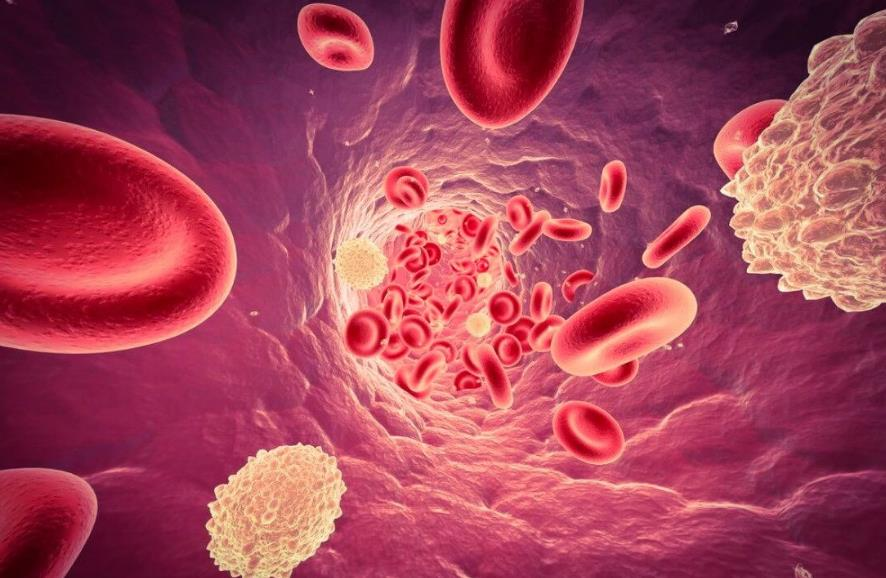 Як знизити лейкоцити в крові