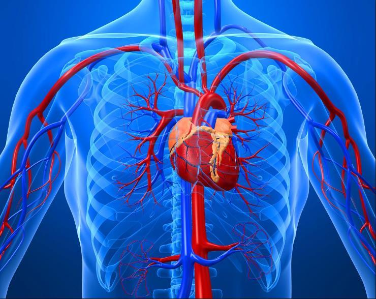 Склероз аорти серця: що це таке
