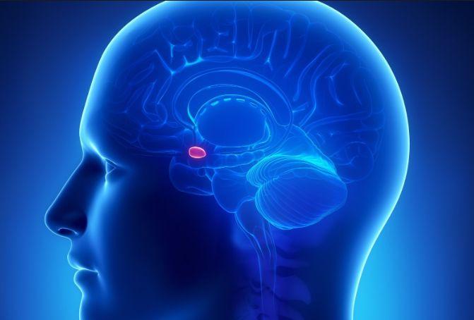 МРТ гіпофіза
