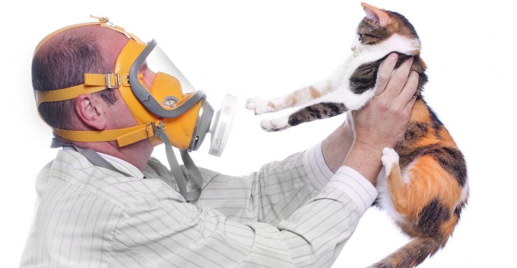 Алергія на домашніх тварин
