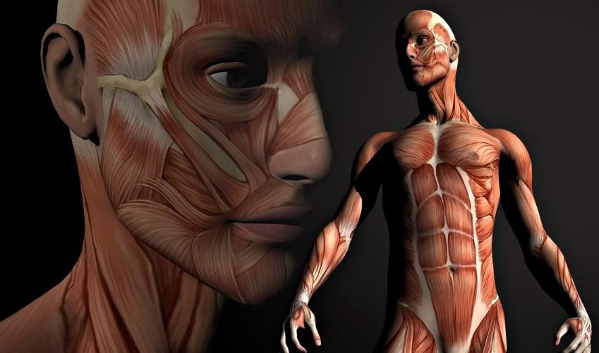 Атрофія м'язів - лікування хвороби