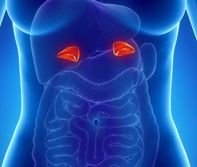 Гіперальдостеронізм: причини, симптоми, діагностика