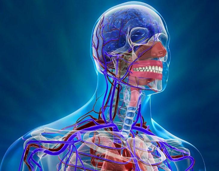 Атеросклероз судин головного мозку – симптоми і лікування