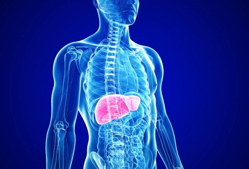 Жировий гепатоз: симптоми, профілактика, лікування