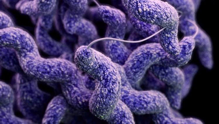 Кампилобактериоз: причини, симптоми, діагностика