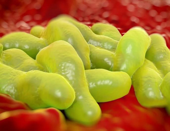 Кампилобактериоз - Вісник інфектології та паразитології
