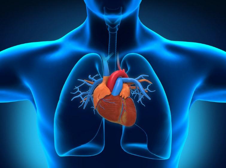 Кардіогенний шок: причини захворювання, основні симптоми, лікування і профілактика