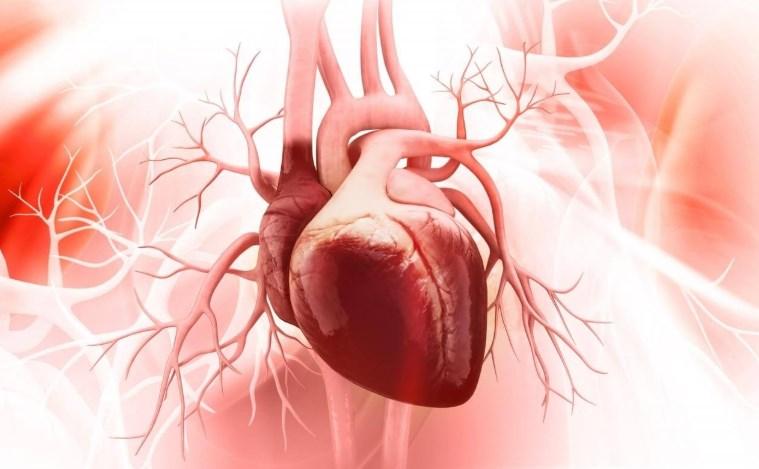 Кардіоміопатії - Хвороби системи кровообігу