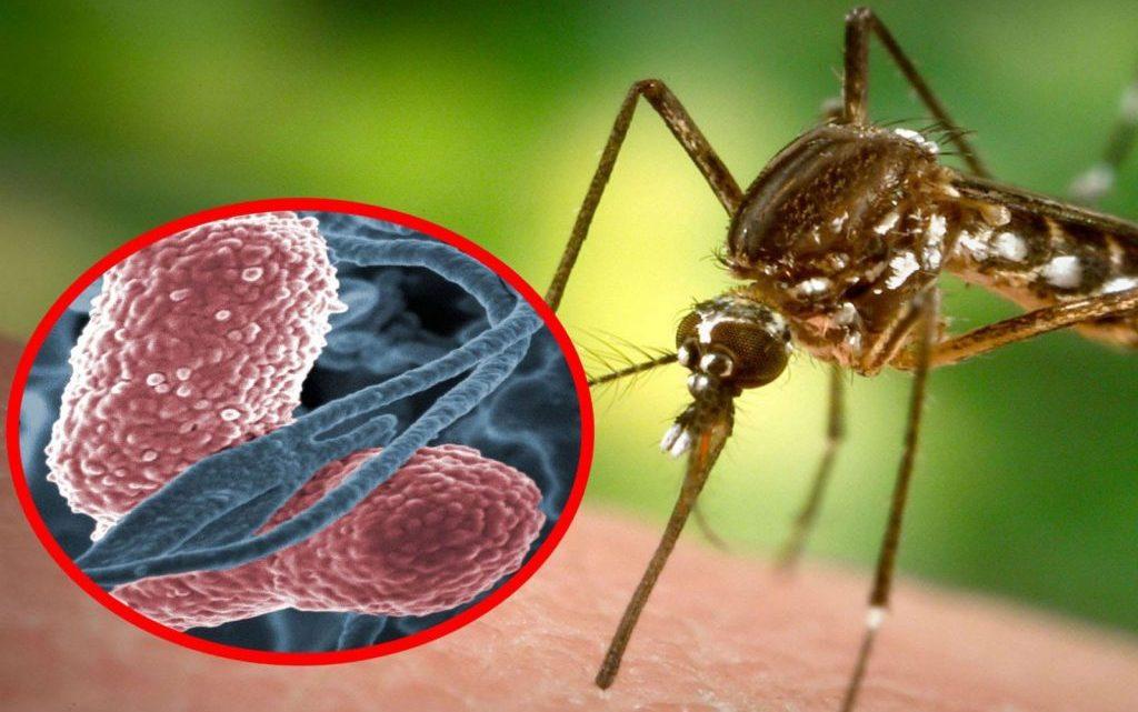 Малярія: причини захворювання, основні симптоми, лікування і профілактика