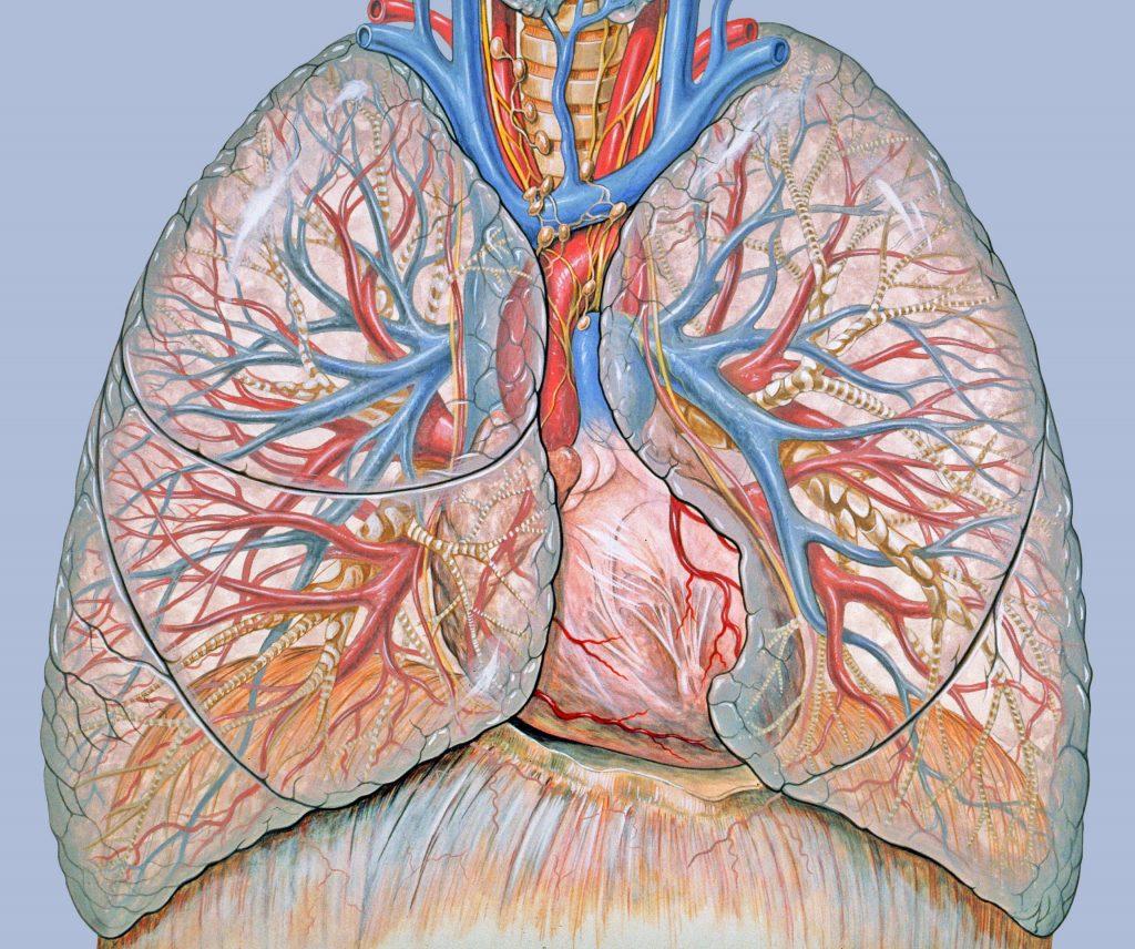Саркоїдоз легенів: причини захворювання, основні симптоми, лікування і профілактика