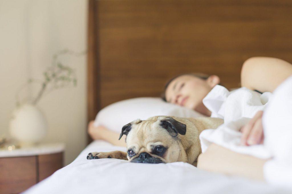 8 правил правильного сну: як добре висипатися