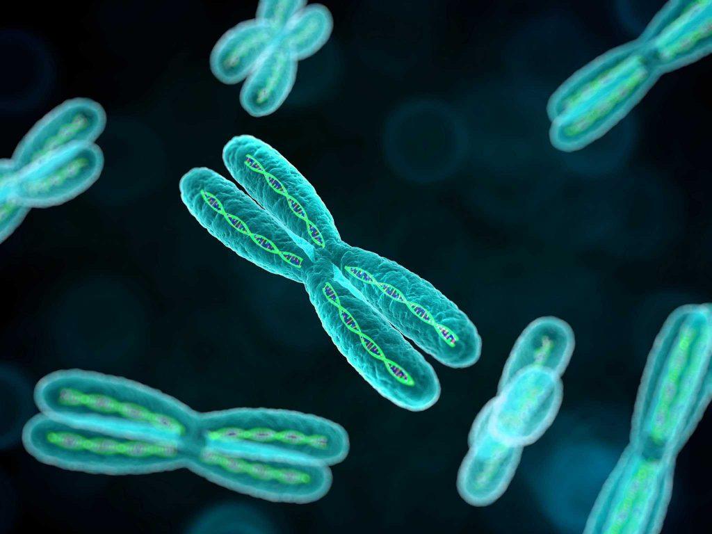 Пороки розвитку та хромосомні аномалії плоду