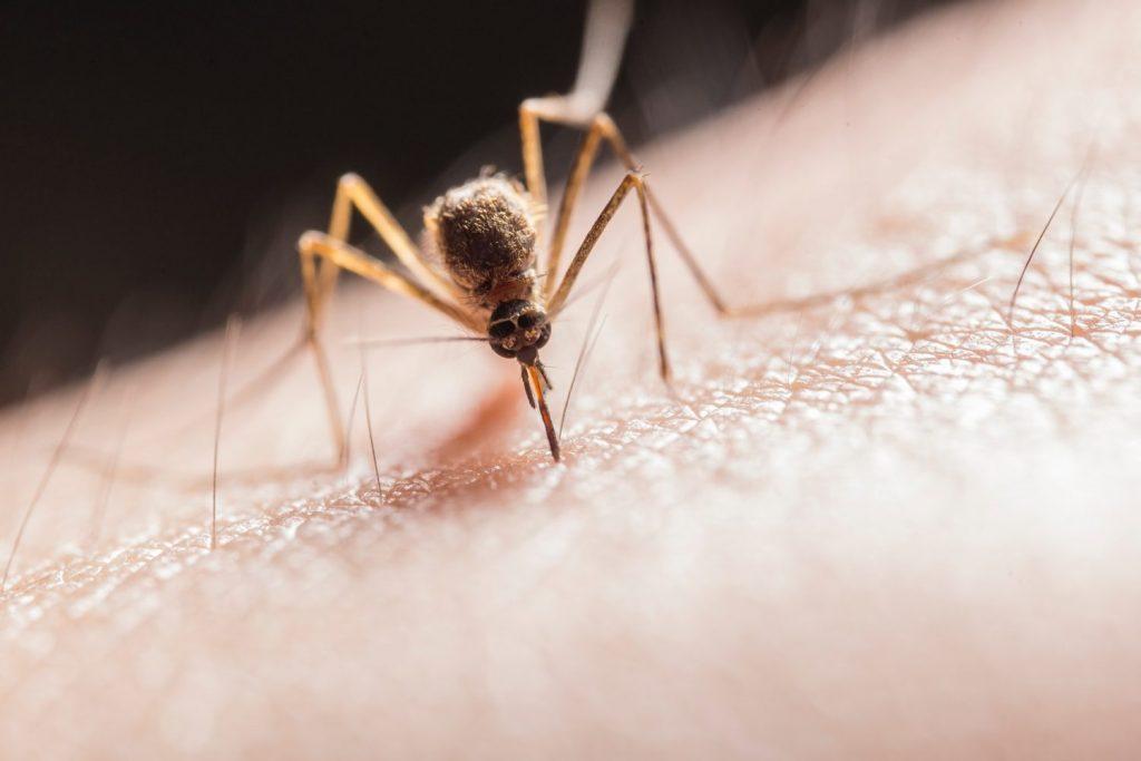 Як прибрати свербіж після укусів комах і впоратися з опіками від трави