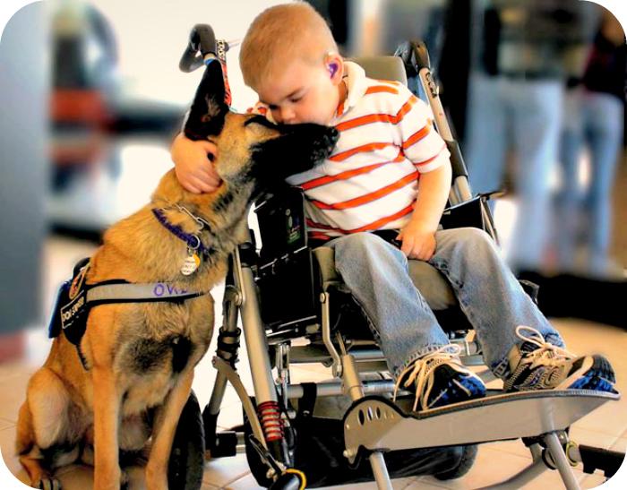 Анімалотерапія - лікування тваринами: види, особливості, протипоказання